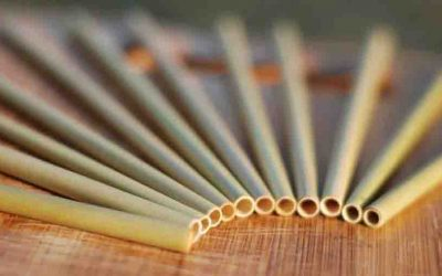 Should your business switch to Bamboo Straws?